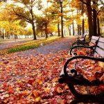 Скамейка в парке, обсыпанная листьями
