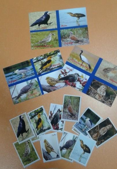 Фото птиц родного края