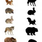 Пять животных и их тени