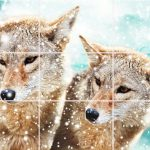 Пазл с двумя волками