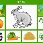 Заяц и его условия жизни
