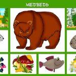 Медведь и его условия жизни
