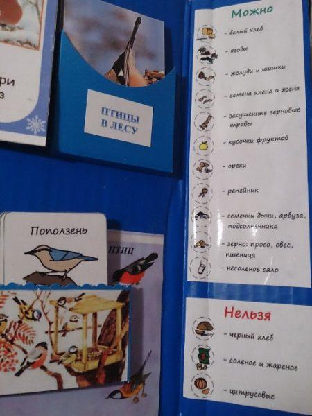 Створка с информацией о выборе корма для птиц