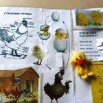 Разворот лэпбука с домашними птицами