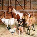 Лошадь, коза, телёнок, собака, петух