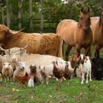 Лошади, овцы, бараны и детёныши
