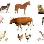 Домашние животные вокруг коровы