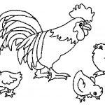 Раскраска Петух и цыплята