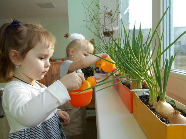 Маленькие девочки поливают из леечек огородные растения на окне