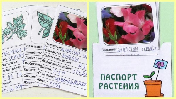 Карточки «Паспорт растения»