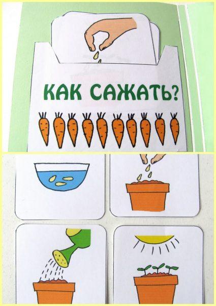 Карточки «Как сажать растение»