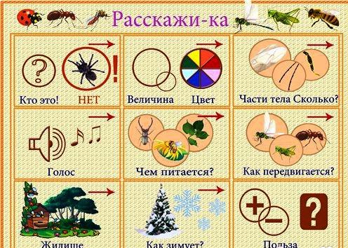 Схема описания насекомого