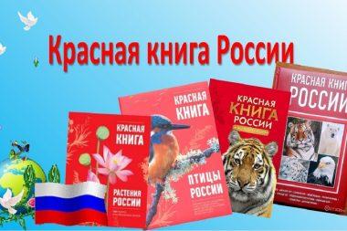 Лэпбук «Красная книга» заставит детей задумать о необходимости трепетного и бережного отношения к природе