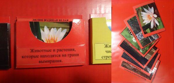 Красный кармашек и карточки