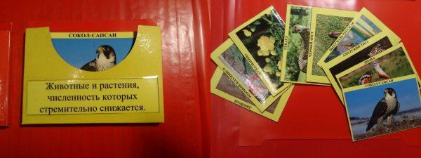 Жёлтый кармашек и карточки