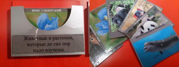 Серый кармашек и карточки