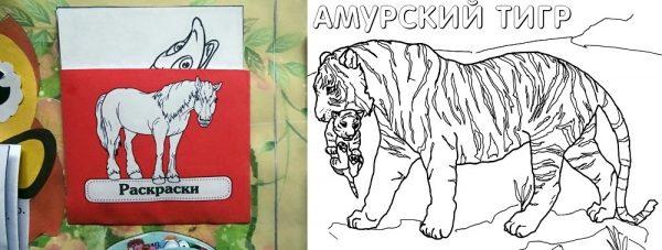 Конверт с ракрасками; амурский тигр (картинка для раскрашивания)
