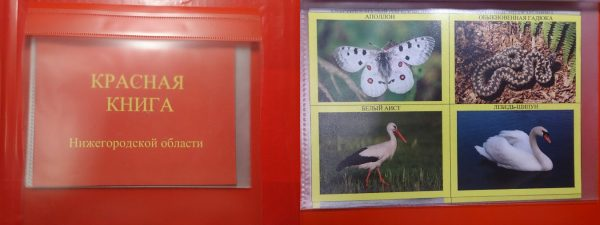 Красная книга Нижегородской области (раздел в лэпбуке): обложка и разворот