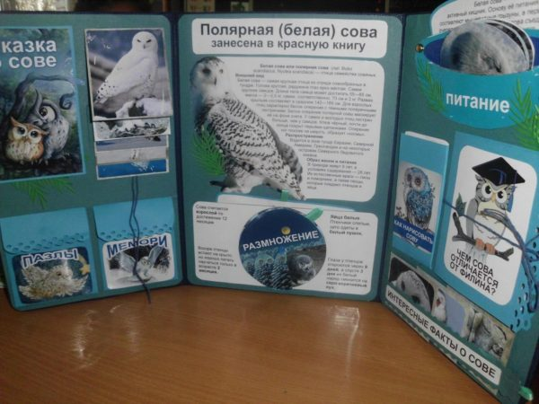 Лэпбук про полярную сову