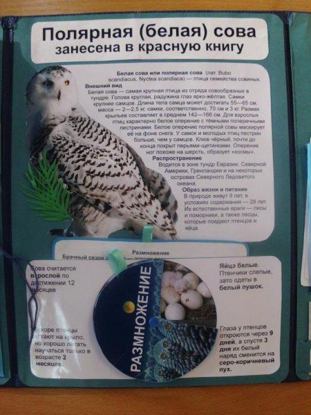 Раздел в лэпбуке «Размножение совы»
