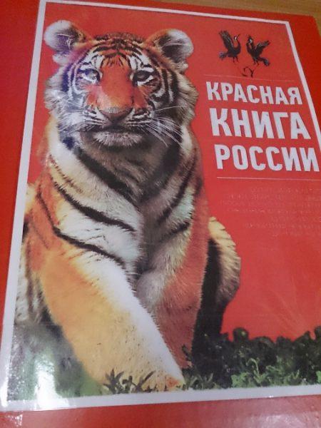 Амурский тигр на обложке лэпбука