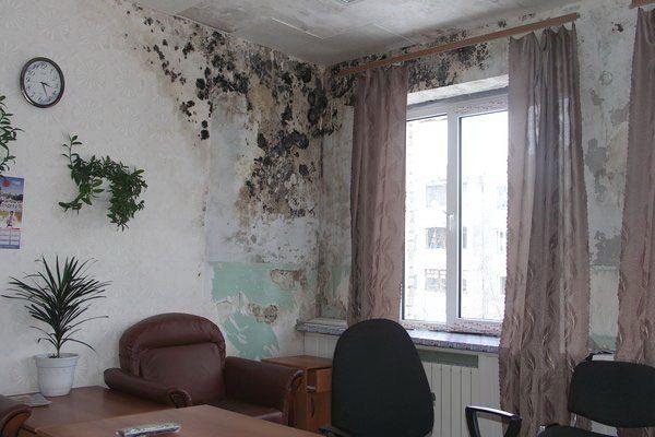 Чёрная плесень на стенах в квартире