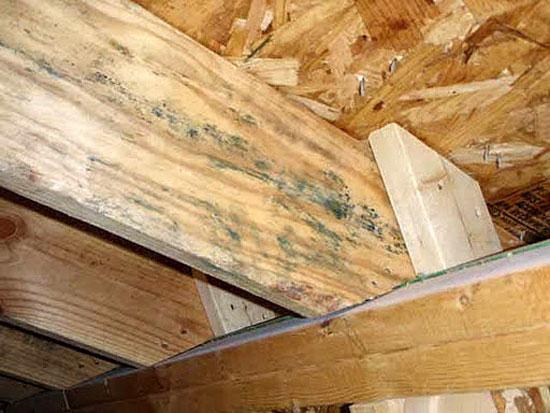 Синяя плесень на деревянных перекрытиях