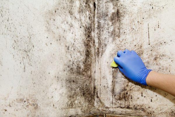 Плесень удаляется с поверхности стены губко