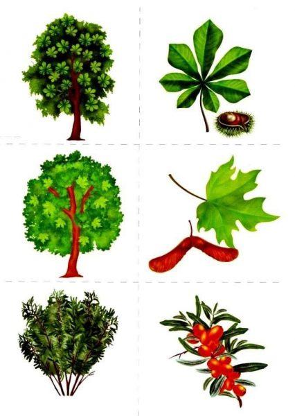 Разрезной материал для упражнения «Деревья, листья, плоды»