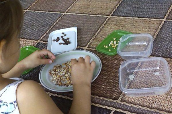 Девочка сортирует крупу, горох и семечки по разным тарелкам
