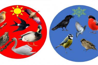 Лэпбук «Зимующие и перелётные птицы» - незаменимое средство экологического воспитания дошкольников.