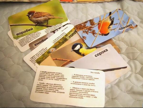 Интересные сведения о птицах