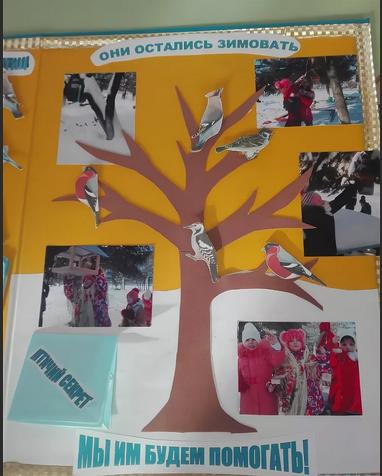 Фото из жизни детского сада на тему «Мы помогает птицам зимой»